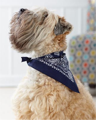 Doggie Skins Bandana for Dogs by LAT Apparel